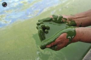 Prepara el estómago y observa las aguas contaminadas de China (FOTOS)