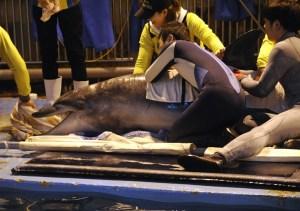 Zoológico de Seúl liberará delfín (Foto)