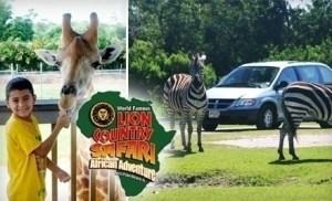 Lion Country Safari American Adventure una excelente opción para los pequeños de la casa en Miami