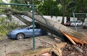 En FOTOS: Árbol aplastó a un carro frente al Parque Codazzi en Prados del Este #16Ago