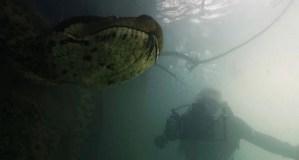 ¡Increíble! Dos buzos logran filmar una gran anaconda de 7 metros en Brasil (Video)