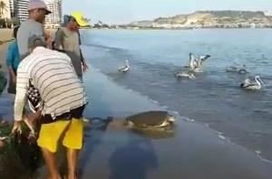 ¡Aún hay esperanza en Venezuela! Esta tortuga se salvó de pasar a ser la cena de una familia (VIDEO)