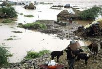 Desarrollan una aplicación para proteger animales en desastres naturales desde Costa Rica