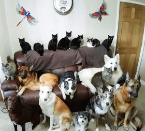 ¡Odisea! Cómo una mujer logró que sus 17 mascotas posaran para una foto, quietos y sin parpadear