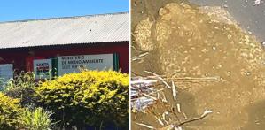 Encontraron un sapo exótico GIGANTE y de los más venenosos del mundo en Argentina (FOTOS)