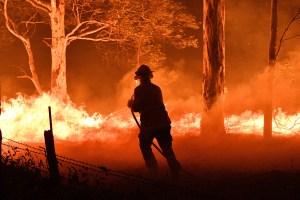 WTF?! Venden consoladores con la forma de Australia para recaudar fondos tras incendios (FOTO)