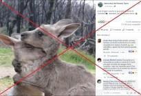 La FOTO de dos canguros abrazados NO es de los recientes incendios en Australia