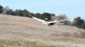 Científicos construyeron un robot con plumas de paloma que vuela perfectamente (Video)