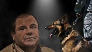 """La verdad sobre """"El Chapo"""" Guzmán y su miedo a los perros"""