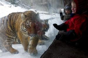 Una cuidadora del zoológico de Zúrich herida de muerte por un tigre