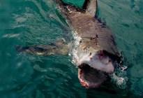 Pescador australiano logró escapar de la boca de un tiburón... pero murió desangrado en los brazos de su hermano