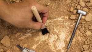 El ATERRADOR descubrimiento de unos arqueólogos en un yacimiento en España (FOTOS)