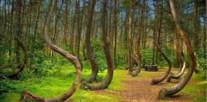 Ovnis, desapariciones, fantasmas: Todo lo que sucede en el bosque más embrujado del mundo