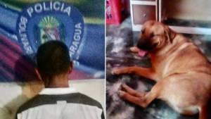 Detuvieron a un degenerado en Aragua por torturar a un perro con un cuchillo