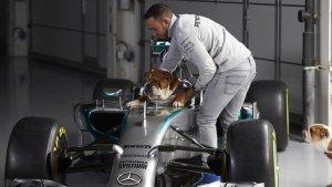 Lewis Hamilton reveló los cambios que sufrió su perro al convertirlo en… ¿vegano?