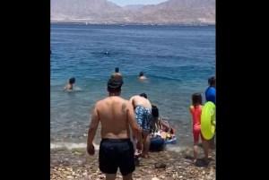 ¡Susto! Un ENORME tiburón emerge a pocos metros de una playa llena de bañistas (VIDEO)