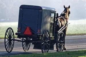 Al menos siete heridos tras el choque de un auto contra un caballo y un buggy en Nueva York