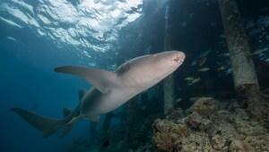 Una mujer embarazada se lanza al agua para salvar a su esposo, que había sido mordido por un tiburón