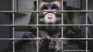 España investiga presunta crueldad en laboratorio de experimentación animal