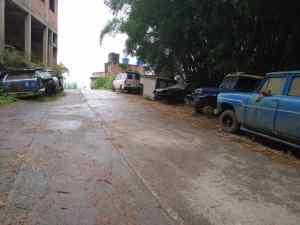 Zozobra en habitantes de Hoyo de La Puerta por aparición de serpientes venenosas (Fotos)