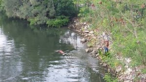 Imágenes sensibles: El momento en que un cocodrilo devoró a una mujer en México