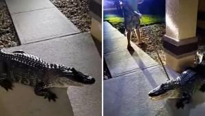 ¡Aterrador! Enorme caimán apareció en la casa de una familia en Florida (VIDEO)