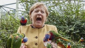 Angela Merkel visitó un parque de aves donde fue acorralada y mordida por una bandada de loros (FOTOS)