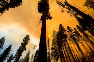 California eliminará más de 10 mil árboles afectados por los incendios